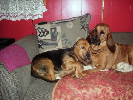 Click image for larger version  Name:rosie &ruby2.JPG Views:1 Size:28.4 KB ID:24