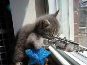 Click image for larger version  Name:SniperKitty.jpg Views:1 Size:10.8 KB ID:166